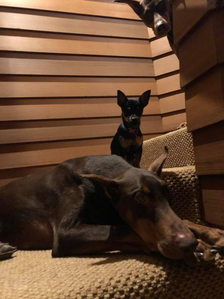 Doggies guarding the stairs