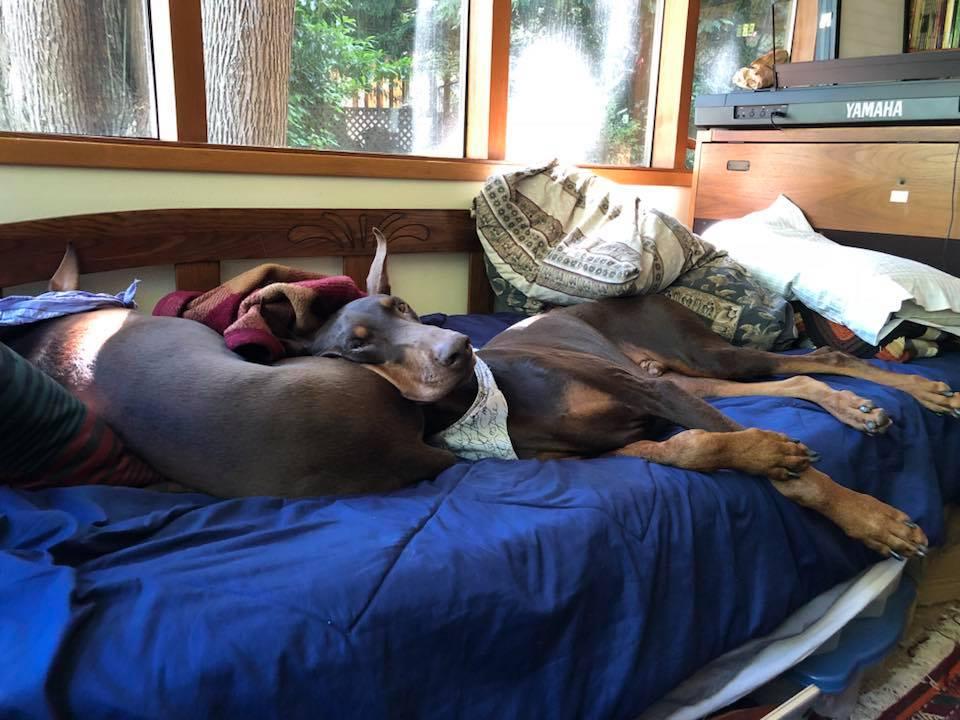 Strut thinks Spring makes a convenient headrest