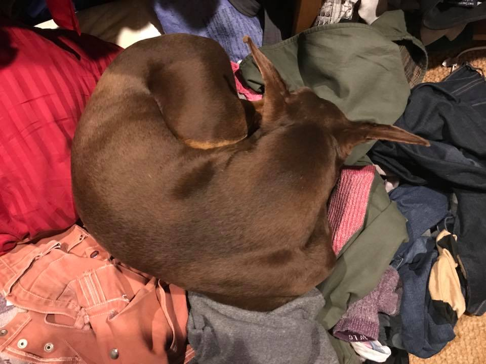 Spring guarding our laundry in our walk-in closet