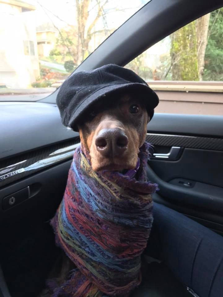 Getting in the car, Spring was cold so Irene put her hat and scarf o