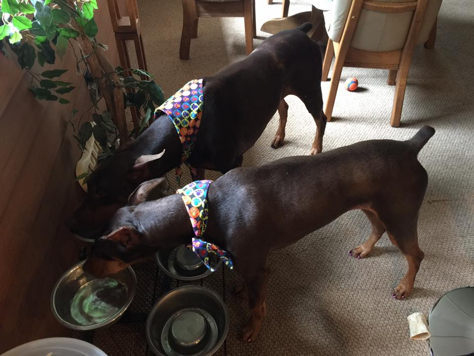 """The Dorable Doberpersons are home after a four day stay at their """"spa"""
