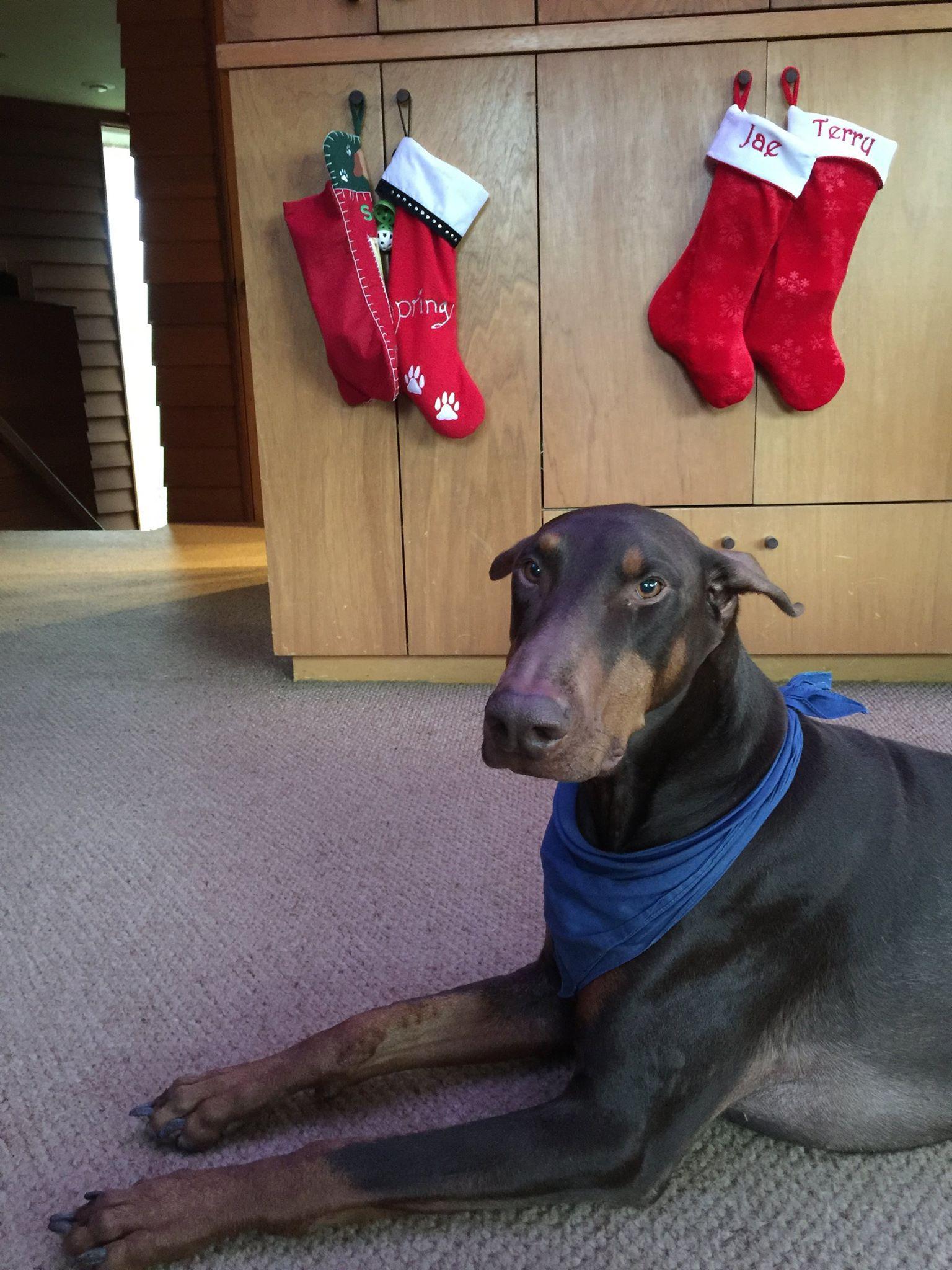 Strut wants his stocking…
